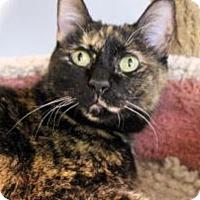 Adopt A Pet :: Georgia - Palatine, IL