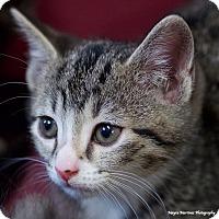 Adopt A Pet :: Arrow - Homewood, AL
