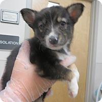 Adopt A Pet :: Caven - Murphysboro, IL