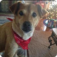 Adopt A Pet :: * Nuggett - Chattanooga, TN