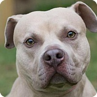 Adopt A Pet :: TITAN - Waterford, VA