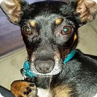 Adopt A Pet :: Clyde - Bedford Hills, NY