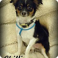 Adopt A Pet :: Chilli - Anaheim Hills, CA