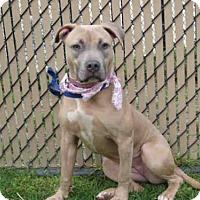 Adopt A Pet :: *HONEY - Norco, CA