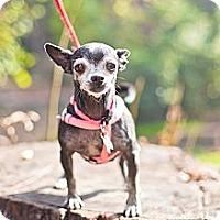 Adopt A Pet :: Izzy - Sherman Oaks, CA