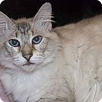 Adopt A Pet :: Giselle - New Port Richey, FL