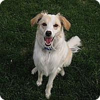 Adopt A Pet :: Sadie - Charlottesville, VA