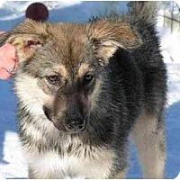 Adopt A Pet :: Tundra - Rigaud, QC