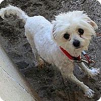Adopt A Pet :: Charmaine - Long Beach, CA