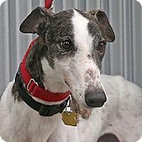 Adopt A Pet :: Gandy - Santa Rosa, CA