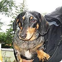 Adopt A Pet :: Maddie - West Bloomfield, MI
