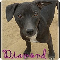 Adopt A Pet :: Diamond - Bakersfield, CA