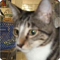 Adopt A Pet :: Lacey - Fort Lauderdale, FL