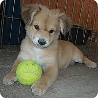 Adopt A Pet :: Chester - San Ysidro, CA