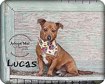 Dachshund Mix Dog for adoption in Los Angeles, California - Lucas