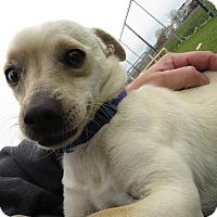 Adopt A Pet :: Moe - Meridian, ID
