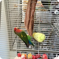 Adopt A Pet :: Lilly - Punta Gorda, FL