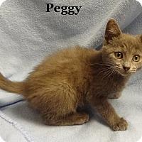 Adopt A Pet :: Peggy - Bentonville, AR