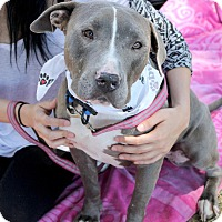 Adopt A Pet :: Sasha - click 4 story + videos - Los Angeles, CA