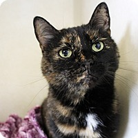 Adopt A Pet :: Tizzy - Chicago, IL