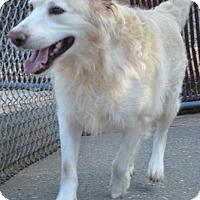 Adopt A Pet :: Ty - Brattleboro, VT