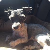 Adopt A Pet :: Odan - Las Vegas, NV