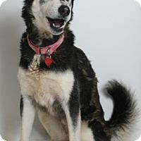 Adopt A Pet :: Nadia - Redding, CA