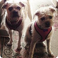 Adopt A Pet :: ROXY & D.O.G. - URGENT!!! - Phoenix, KS