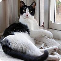 Adopt A Pet :: Squiggie - Fullerton, CA