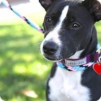 Adopt A Pet :: Calliope - Los Angeles, CA