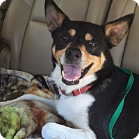 Adopt A Pet :: Champ - San Antonio, TX