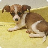 Adopt A Pet :: Beethoven - Pflugerville, TX