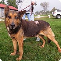 German Shepherd Dog Mix Dog for adoption in Unionville, Pennsylvania - Freeway