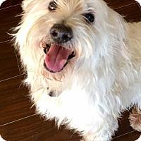 Adopt A Pet :: Fluff - Aurora, IL