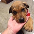 Adopt A Pet :: The Boss