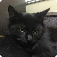 Adopt A Pet :: Augustus Goop - Sherman Oaks, CA