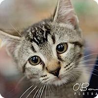 Adopt A Pet :: Ely - Baytown, TX