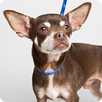 Adopt A Pet :: Edwin - Columbia, SC