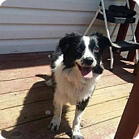 Adopt A Pet :: Kona - Davie, FL
