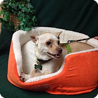 Adopt A Pet :: Daisey - Tehachapi, CA