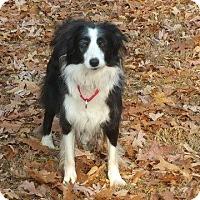 Adopt A Pet :: Cary - Crossville, TN