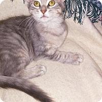 Adopt A Pet :: Farrah - Centerton, AR