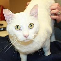 Adopt A Pet :: Snowball - Cottageville, WV