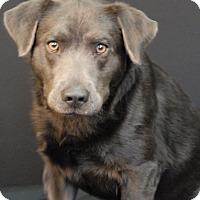 Adopt A Pet :: Slate - Newland, NC