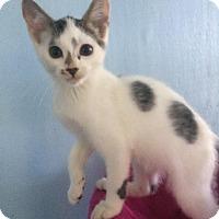 Adopt A Pet :: Brandon - Savannah, GA