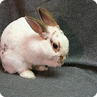 Adopt A Pet :: Emilee - Newport, DE
