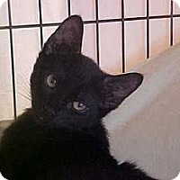 Adopt A Pet :: Luke - Lunenburg, MA