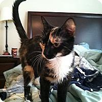 Adopt A Pet :: Jewel - Monroe, GA