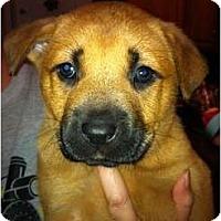Adopt A Pet :: Rio - Orlando, FL