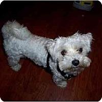 Adopt A Pet :: Ace - Dayton, OH